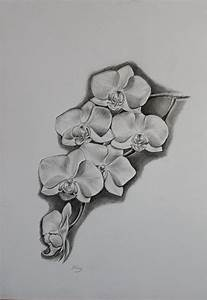 122 best images about Flowers drawings of orchids on ...