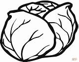 Coloring Lettuce Pages Drawing Printable Tutorials Paper sketch template
