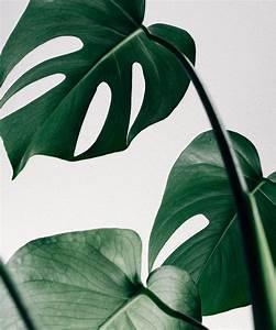 Coole Poster Fürs Zimmer : best cool house plants how to care ideen f rs zimmer badezimmer fliesen und diy bilder ~ Bigdaddyawards.com Haus und Dekorationen