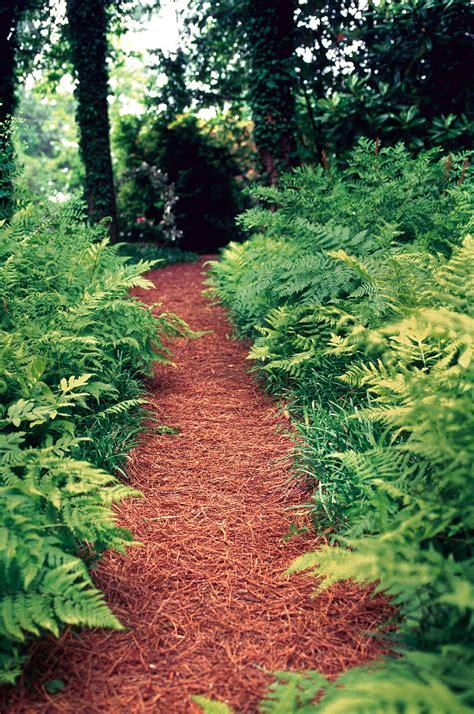plants for shady areas prime perennials for shady areas louisiana gardener web articles