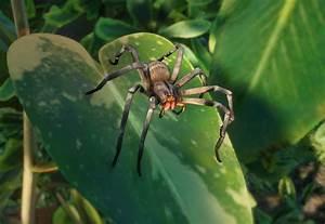 Tundra Animals Brazilian Wandering Spider Planet Zoo Wiki Fandom