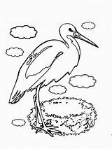 Stork Coloring Pages Storks Birds Printable Trailers Designlooter Coloring2print Recommended sketch template