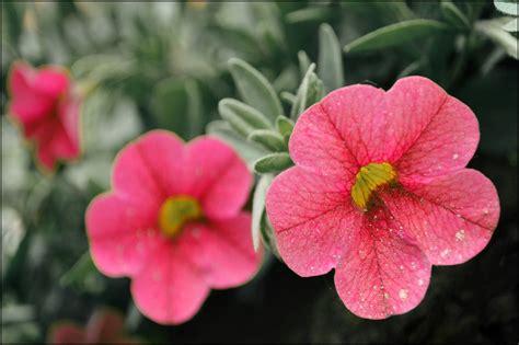 foto Zane Meiere: Vasara, ziedi un fotogrāfija
