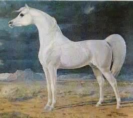 Pennsylvania Arabian Horse Association - The Arabian Horse