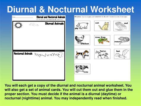 nocturnal diurnal animals worksheet animal ppt powerpoint presentation slideserve