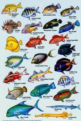 tropical fish images  names list  tropical fish