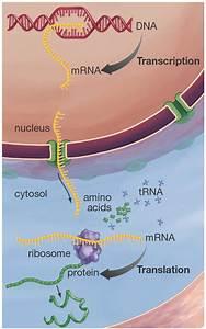 Mlab 2378 Fundamentals Of Molecular Diagnostics