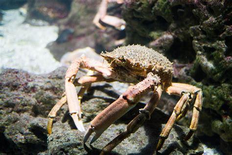 ocearium du croisic l aquarium g 233 ant papa teste