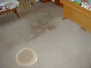 Upholstery Cleaning Louisville Ky by Commercial Carpet Cleaning Louisville Ky Envirocare Services