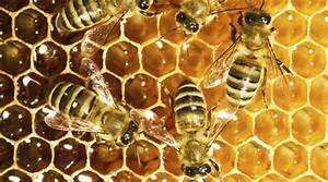 Warum Machen Bienen Honig : bio honig warum es sich lohnt auf bioqualit t zu setzen ~ Whattoseeinmadrid.com Haus und Dekorationen