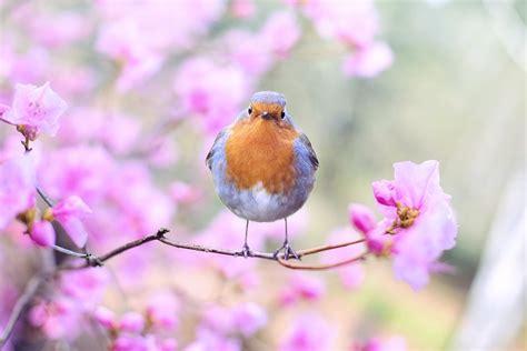 fruehling vogel kostenloses foto auf pixabay