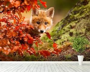 Fox, Wall, Mural, U0026, Fox, Wallpaper