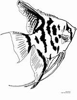 Fish Coloring Angel Pages Aquarium Angelfish Freshwater Printable Print Colors Miracle Timeless Own sketch template