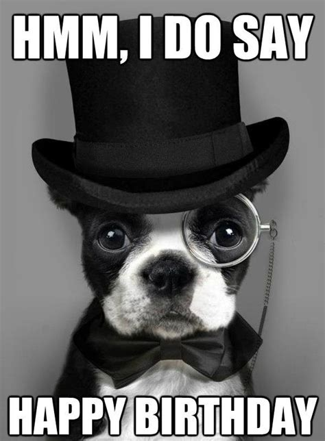 Puppy Birthday Meme - 17 best ideas about happy birthday dog on pinterest happy dogs funny puppies and birthday wishes
