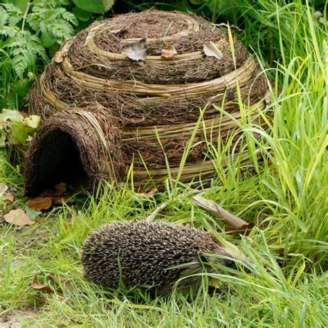 Garden Igloo Erfahrungen by Igloo Hedgehog Home Find Me A Gift