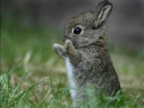 cute bunny backgrounds wallpaper cave