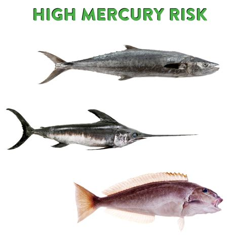 mercury levels   types  fish