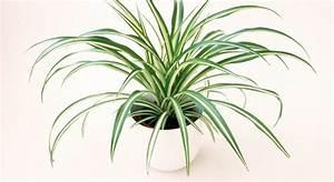 Pflanzen Die Wenig Wasser Brauchen : b ropflanzen die 12 besten gr npflanzen f rs b ro impulse ~ Frokenaadalensverden.com Haus und Dekorationen