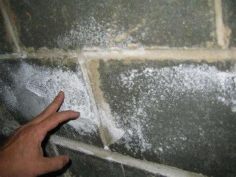 white mold  walls quora