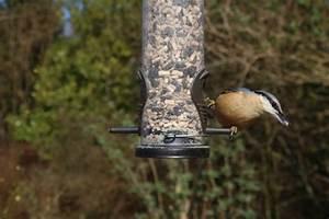 Graines Oiseaux Du Ciel : quelle alimentation pour les oiseaux du ciel blog ~ Melissatoandfro.com Idées de Décoration