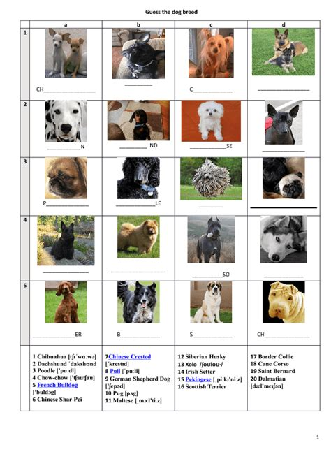 names  dog breeds  pictures