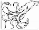 Squid Giant Gigante Calamaro Coloring Octopus Tattoo Riesenkalmar Illustrazione Engraving Calmar Colour Cartoon Clipart Simple Illustrations Incisione Dell Geant Gravure sketch template