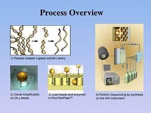Mammoth Genome Project PSU