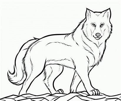 Clipart Wolves Wolf Pack Coloring Clip Pages