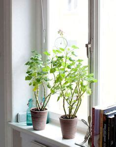 Indoor Windowsill Flowers by 352 Best Windowsill Plants Images Window Frames