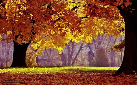 3d Falling Leaves Animated Wallpaper - leaf fall screensaver 1 0 nesbofor