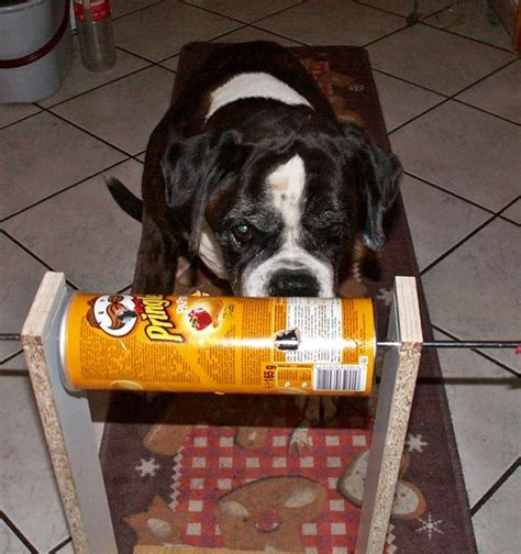 hundespielzeug selber bauen die besten 25 intelligenzspielzeug hund ideen auf intelligenzspielzeug katze