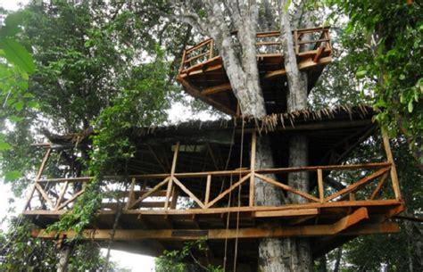 cuisine smith maison dans un arbre au gabon