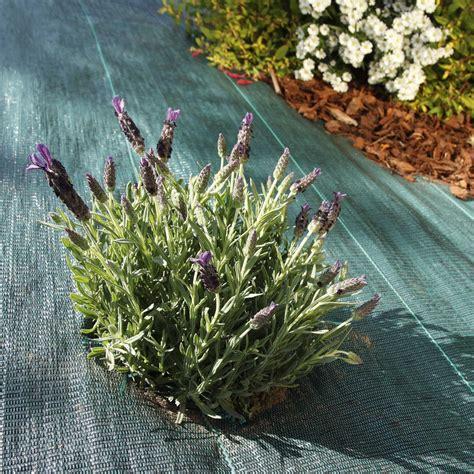Bache Jardin Anti Herbe by Bache Anti Repousse Herbe Pas Cher