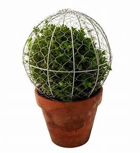 Buchsbaum Schablone Kaufen : buchsbaum schablone pyramide im greenbop online shop kaufen ~ Watch28wear.com Haus und Dekorationen
