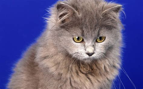 Animals Wallpapers For Windows 7 - animal photos pet photo widescreen high