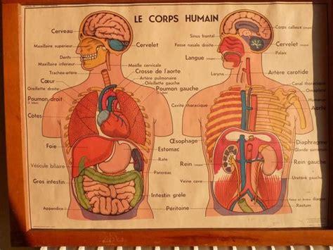 anatomie corps humain image