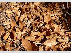 Leaves Autumn Dry Nature · Free photo on Pixabay