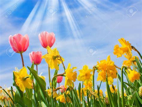 Résultat d'images pour fleurs du printemps