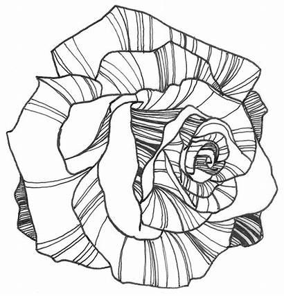 Flower Drawings Line Rose Drawing Flowers Coloring