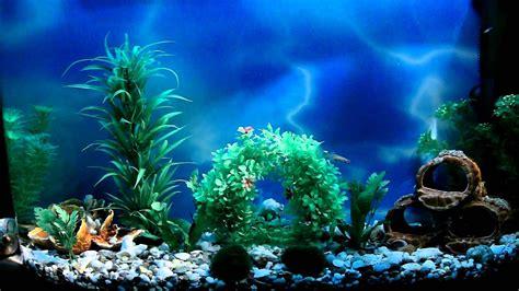 aquarium background pictures  pictures