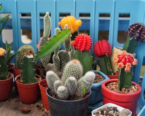 How To Plant A Cactus Container Garden Hgtv