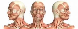 Test Your Anatomy Knowledge  U2013 Head  U0026 Neck