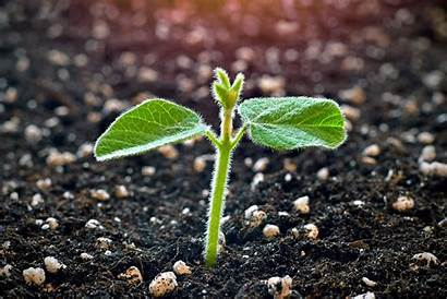 Plant Sprouting Young Soy Soil Science Ecosystem