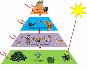 Food Webs And Trophic Levels