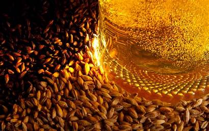 Barley Beer Wallpapers Px Colors Colouful Definition