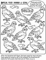 Manna Quail Moses Bible Sunday Wilderness Coloring Pages Crafts Preschool Activities Story Lessons Welcome Stories Dover Publications Class Quails Church sketch template