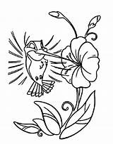 Hummingbird Coloring Pages Cartoon Flower Bird Drawing Hummingbirds Humming Printable Drawings Easy Kidsplaycolor Clip Cliparts Getdrawings Animal Adult Play Library sketch template