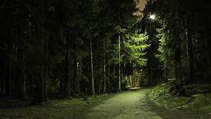 nature, trees, forest, green, branch, path, lights ...
