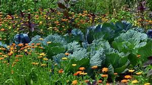 Plantes Amies Et Ennemies Au Potager : comment bien r ussir faire soi m me son jardin potager lci ~ Melissatoandfro.com Idées de Décoration