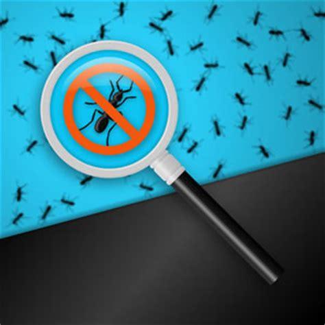 Ameisen Bekaempfen Die Besten Hausmittel by Ameisenplage Was Tun Die Besten Hausmittel Gegen Ameisen